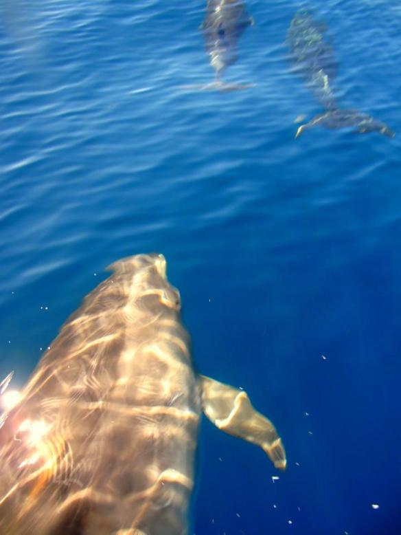 Dolphins from a recent Winnie fishing trip